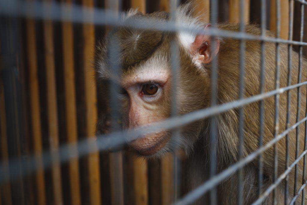 L'ingiustizia economica guida il traffico di specie selvatiche